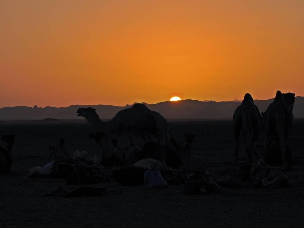 Caravanas nomadas Sahara