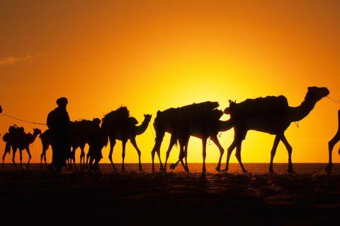 Expedicion en Africa