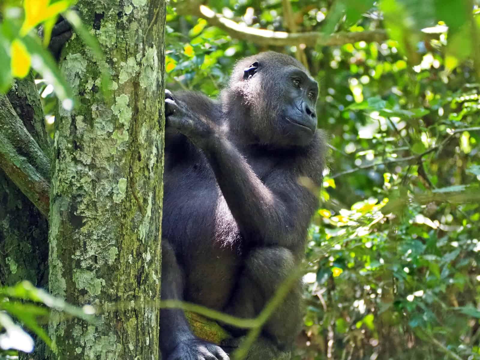 Moukalaba Doudou Gabon