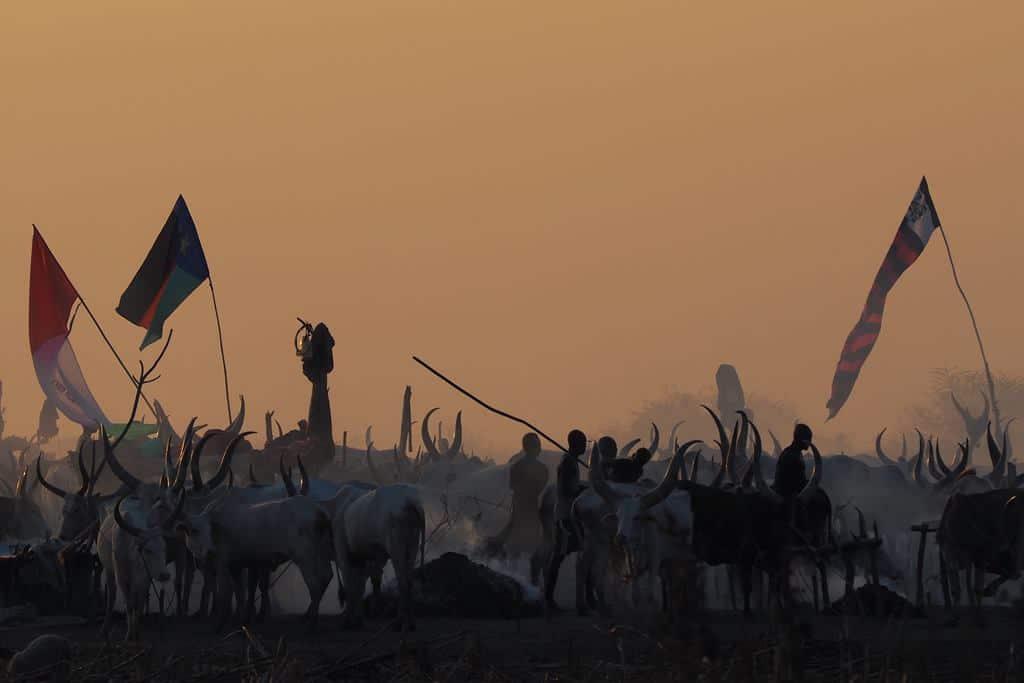 Mundari cattle camp