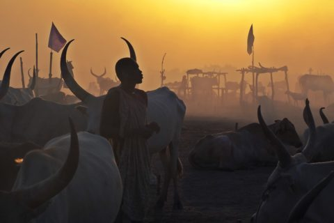 Mundari cattle camp