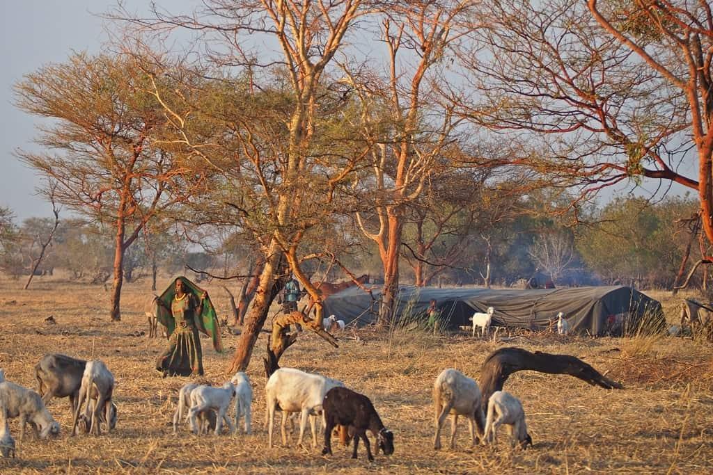 Nomadas Sahel