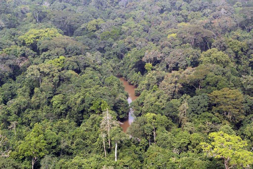 Tai National Park Ivory Coast