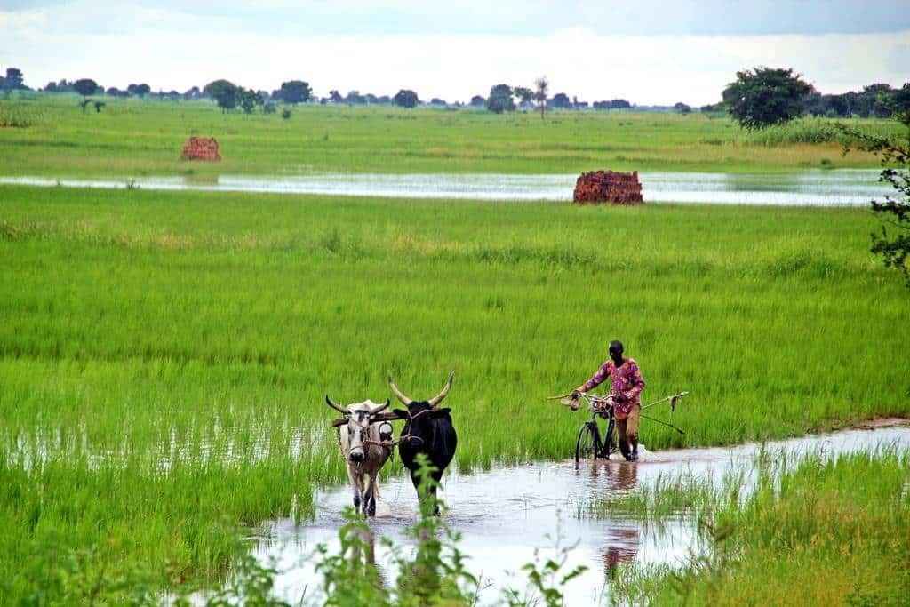 Chad durante temporada de lluvias