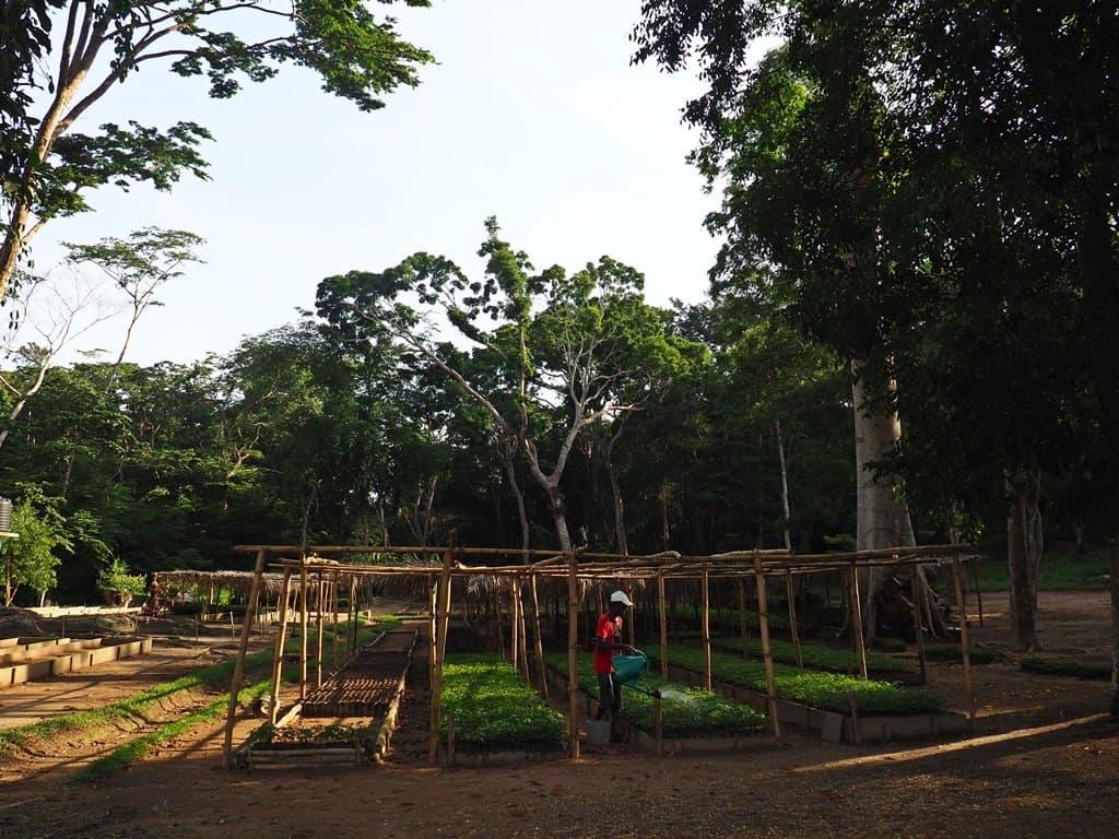 Forets Yangambi