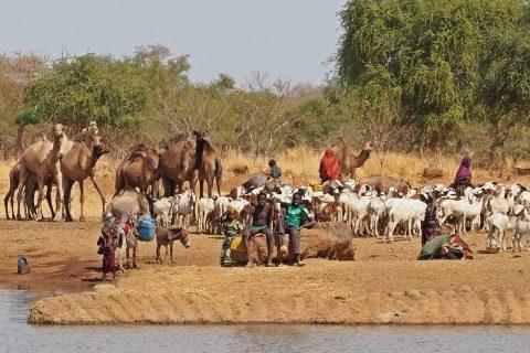 Estanques de agua en Chad