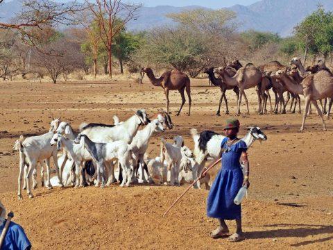 Culturas de Chad