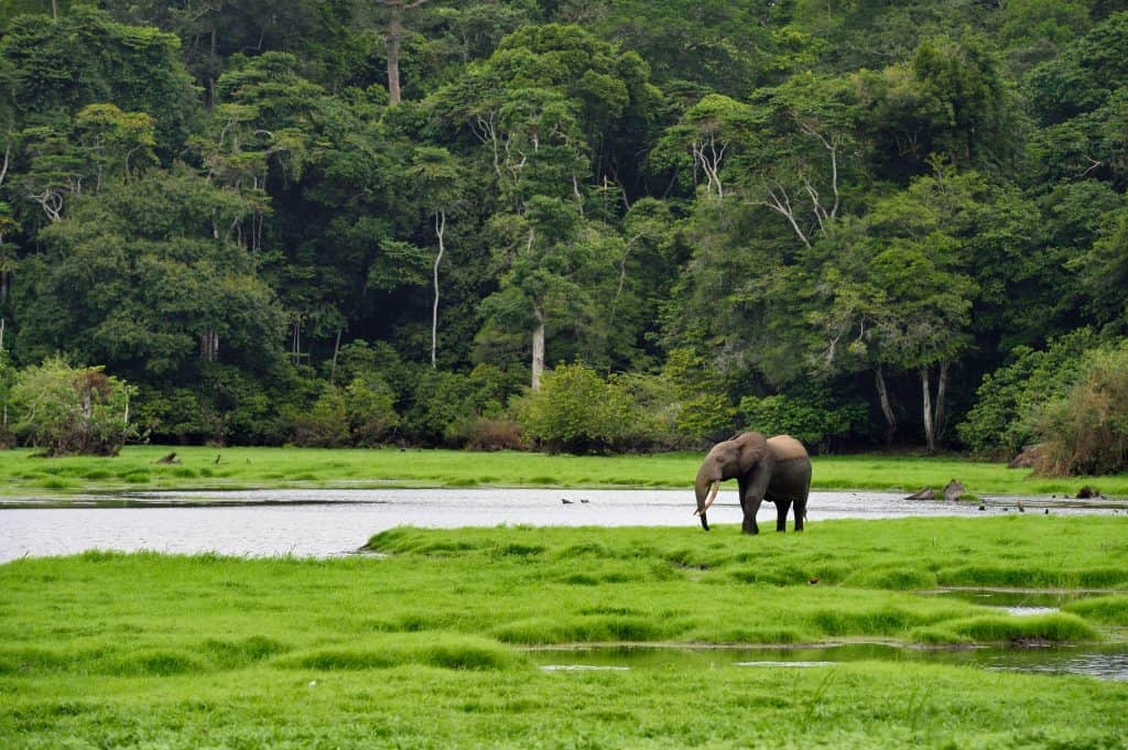Trips to Gabon