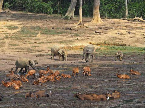 Viajes a Republica Centroafricana