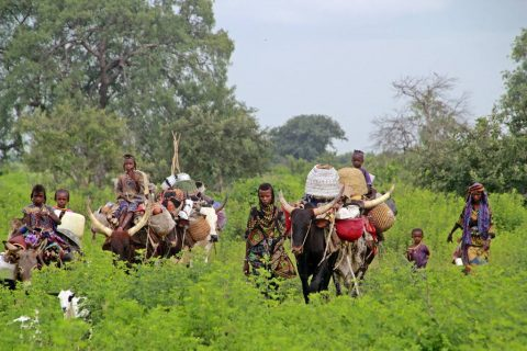 Visit tribes in Africa