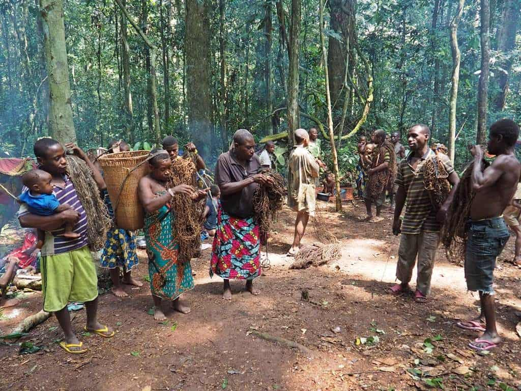 pygmies Baaka