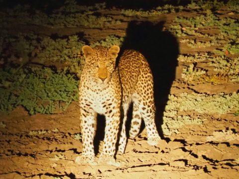 Safari nocturno en Zakouma