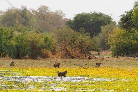 Viaje a Zakouma en Chad