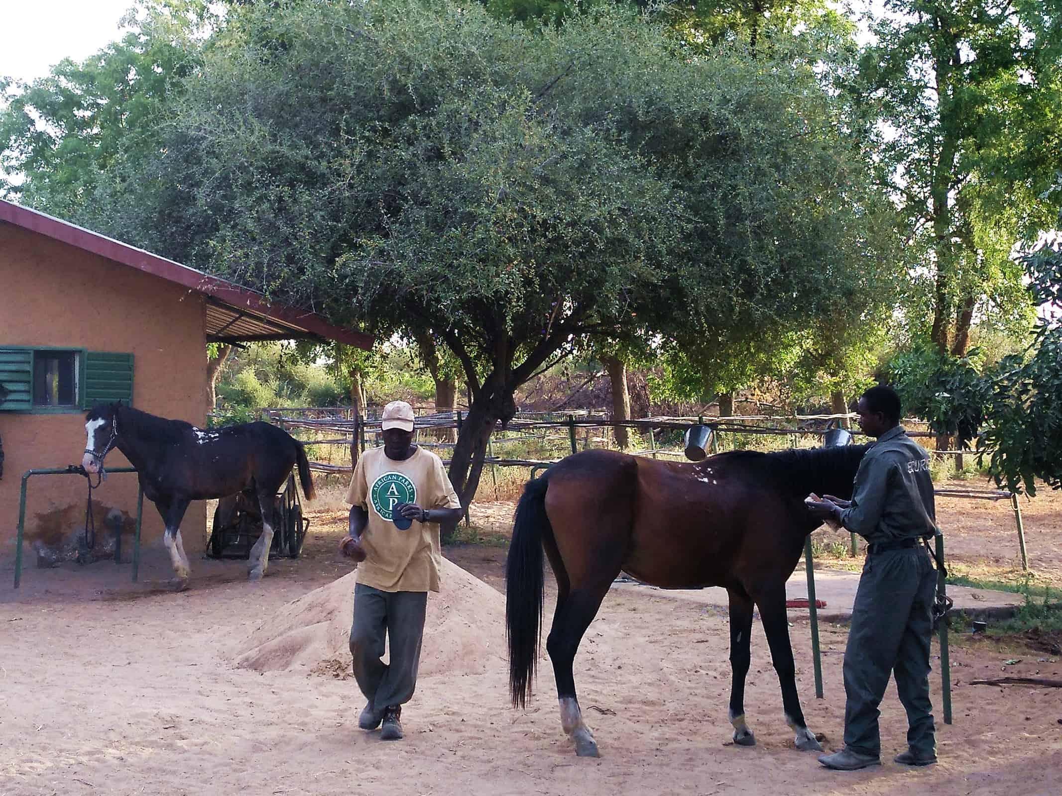 Zakouma horses rangers