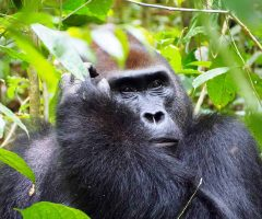 Viajes Republica Centroafricana