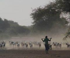 Viajes a Senegal